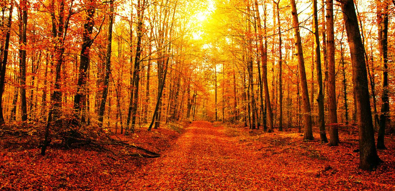 Herbstwald Farbe 14 sun.jpg