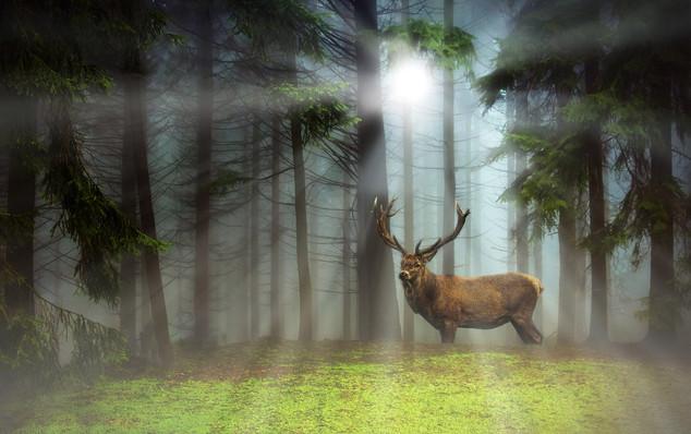 Hirsch im Wald 16.jpg