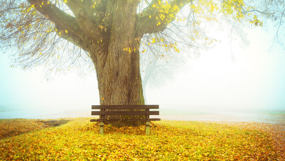 Herbst Baum und Bank 16.jpg
