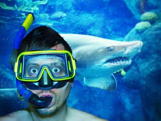 Taucher und Hai 15.jpg