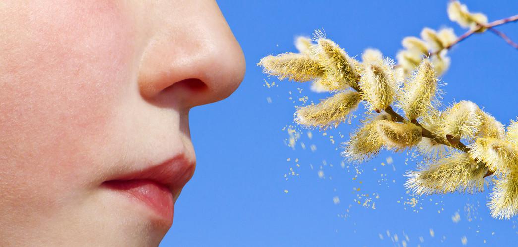 Pollen Allergie 17.jpg
