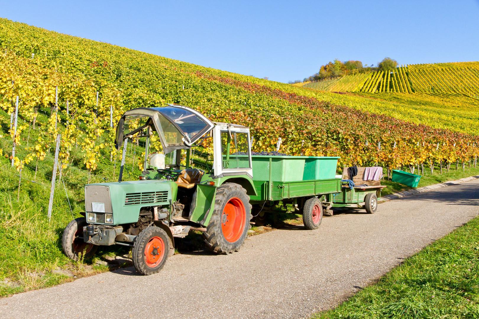 Traktor Weinlese 4.jpg