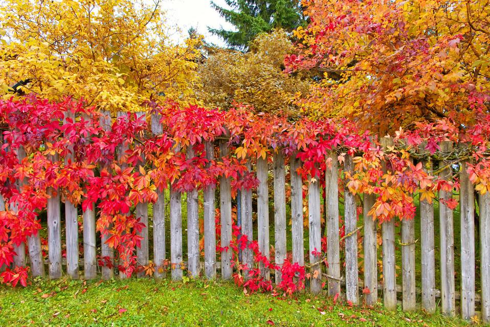 Herbst_Zaun_Allgäu_3.jpg