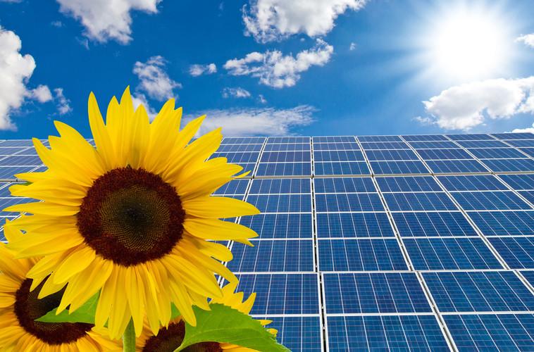Solarzellen und Sonnenblumen.jpg