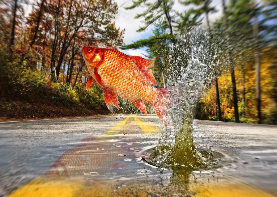 Goldfisch_Straße_2b_17.jpg