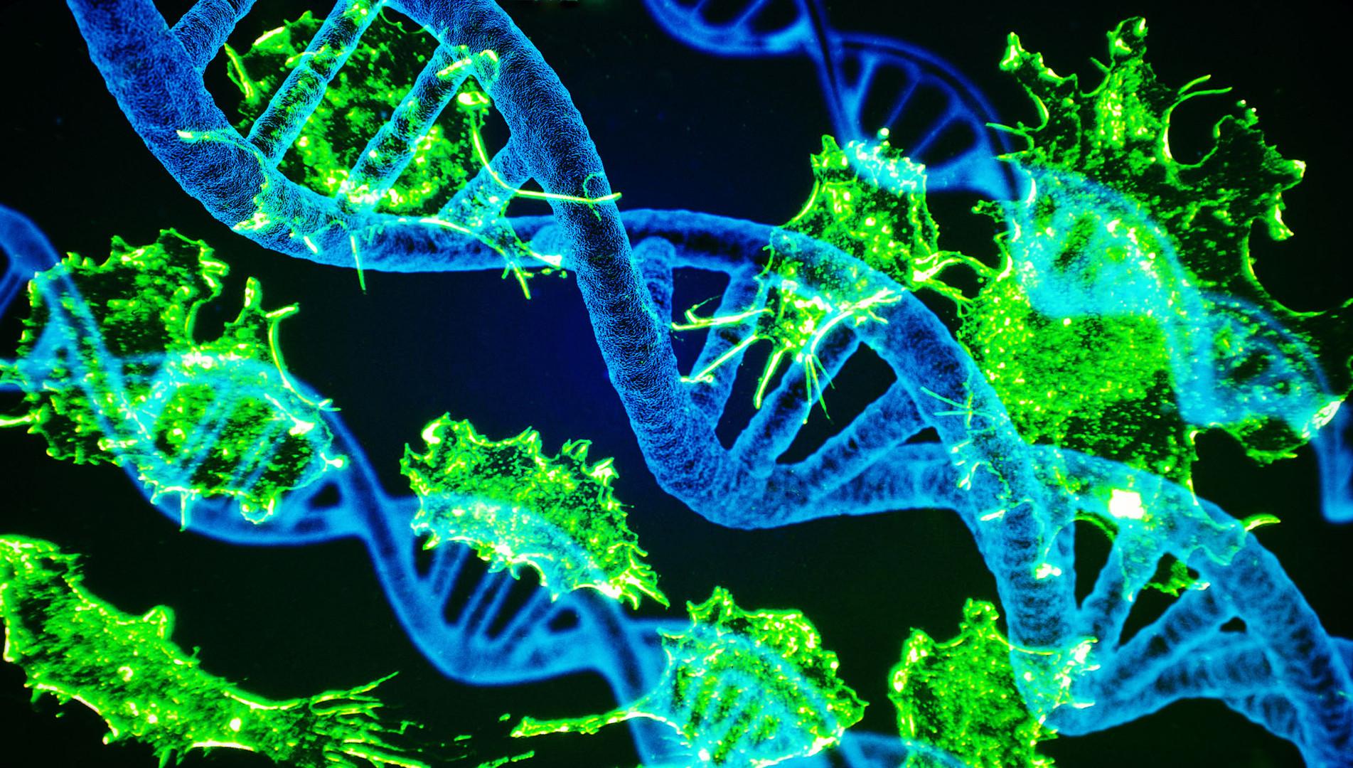 Krebszellen und DNA 2 17.jpg