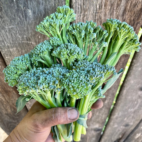 BROCCOLI - 1 BUNDLE