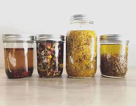 herbs infusing in oil / nourish farm turlock
