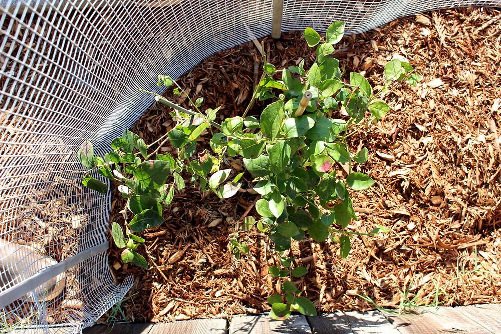 Homestead Update / Sunkissed Botanics Blog