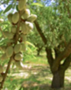BTOF Organic Almond Farm