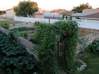 Sunkissed Livin' // Garden Update