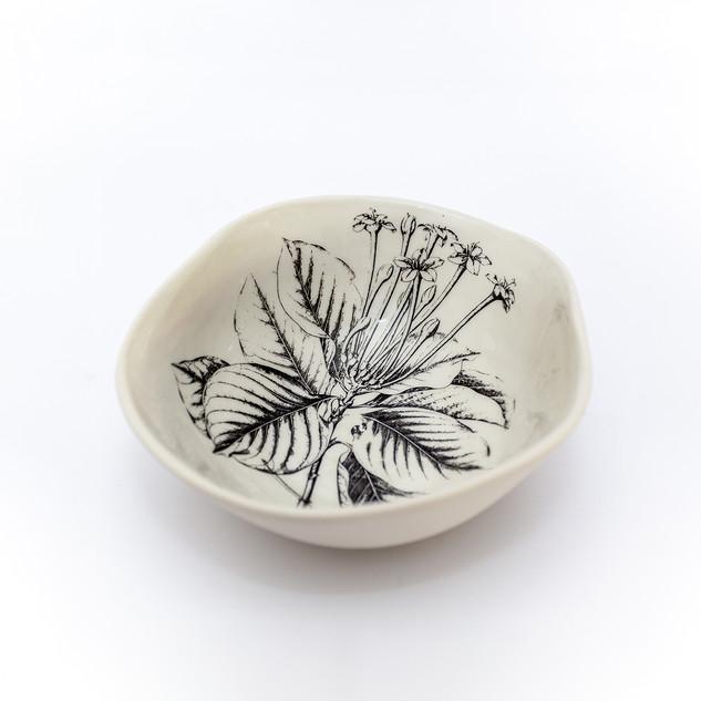 Coleção dos Bowls em Pétalas Botânico 19