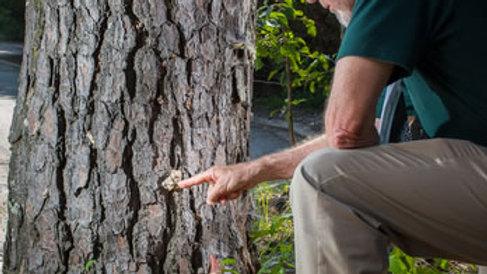 Arborist Evaluation