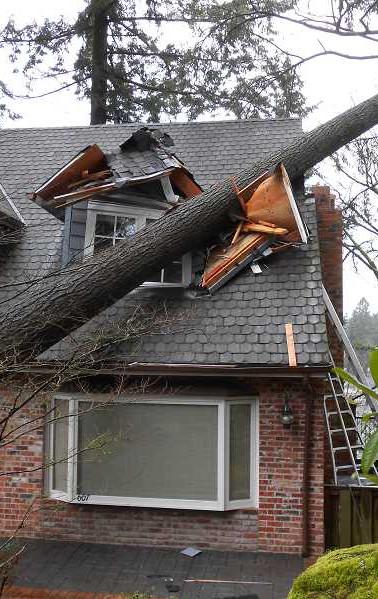 fallen_tree_2.jpg