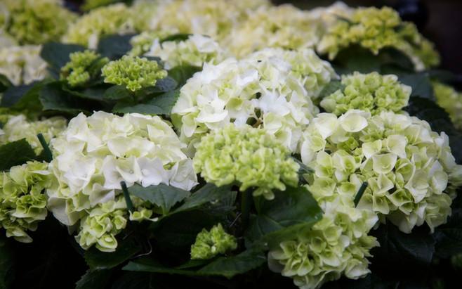 flowers  04.jpg