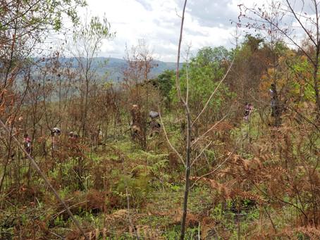 Déclaration de 31 janvier de la CCPDD sur les violations de droits humains dans les Hauts Plateaux