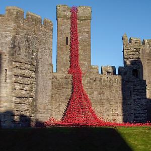 Weeping Window Poppy Exhibition, Caernarfon Castle