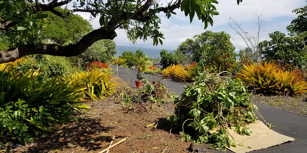 Maka'eo Clean Up & Beautification Day