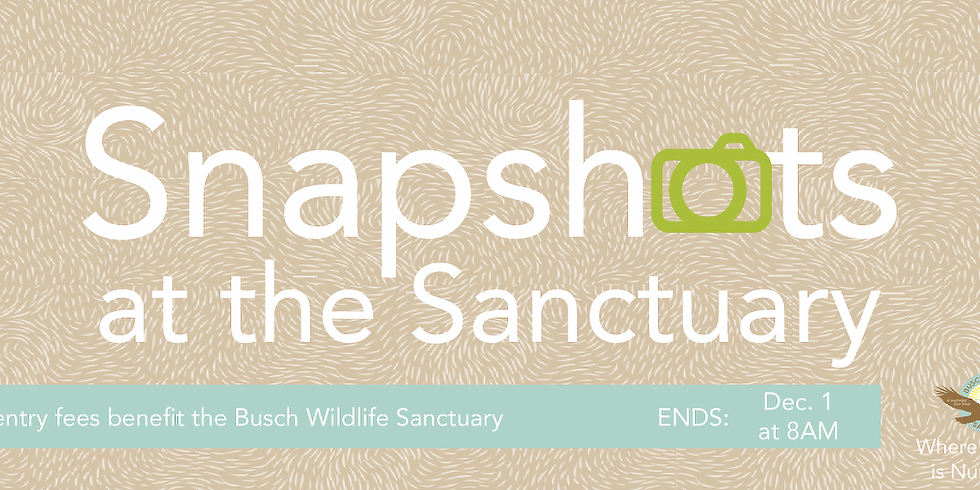 Snapshots at the Sanctuary