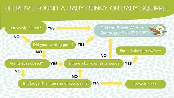 Baby Animal chart.jpg