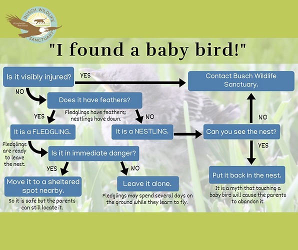 I_Found_A_Baby_Bird.png