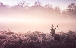 Frosty Antlers