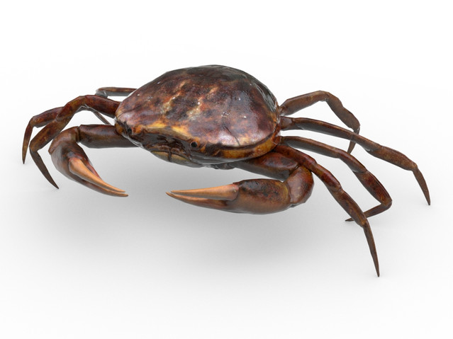 Game ready crab model