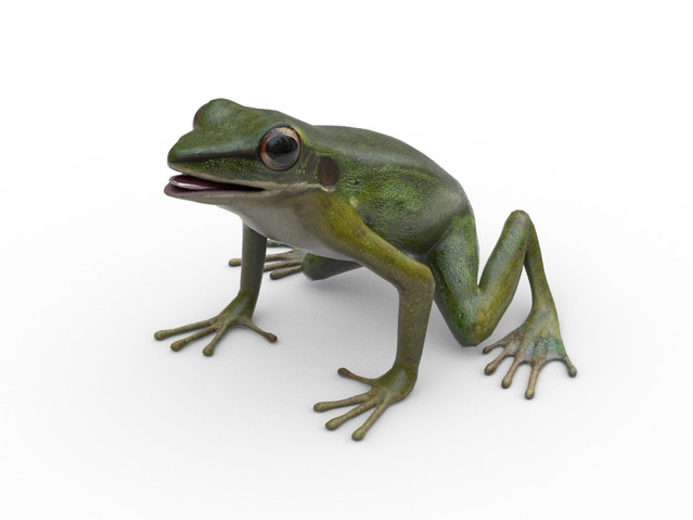 game ready frog model