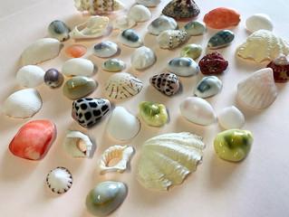 国内外の綺麗な貝殻
