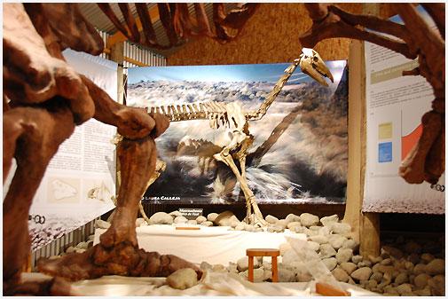museo-calafate6
