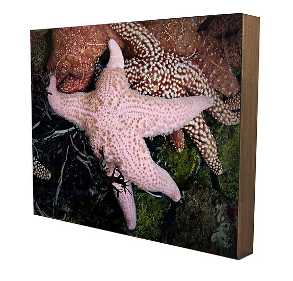 Starfish Prance Handcrafted Artwork