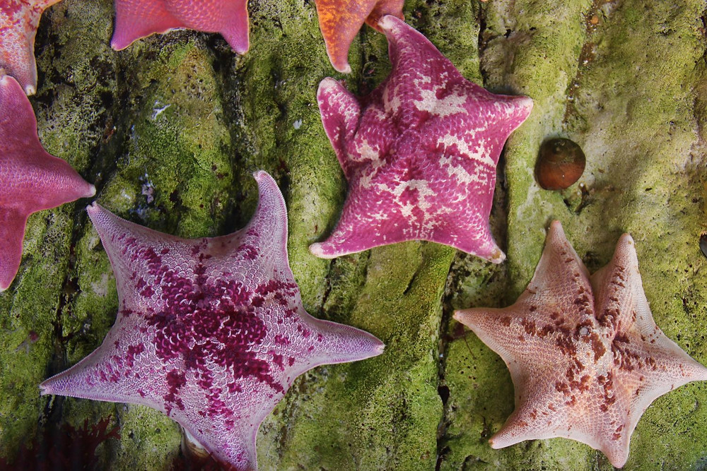 starfish - Urban Natural Designs blog history wisdom of the starfish