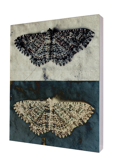 Moth Lace Handcrafted Artwork