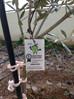 Campaña El olivo Lucio en los centros Escolares 2017.