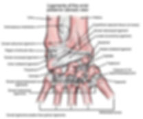 wrist ligaments, anatomy, massage
