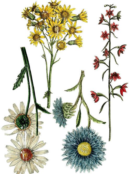 Decor Transfer 'Wild Flower Botanicals'
