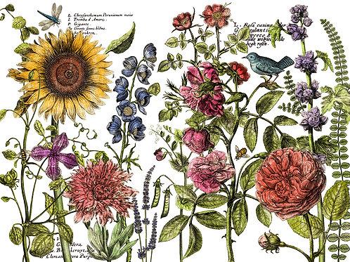 Decor Transfer 'Botanist'