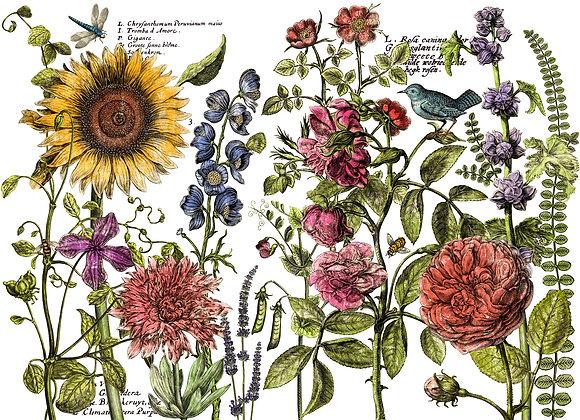 IOD-DT Botanist