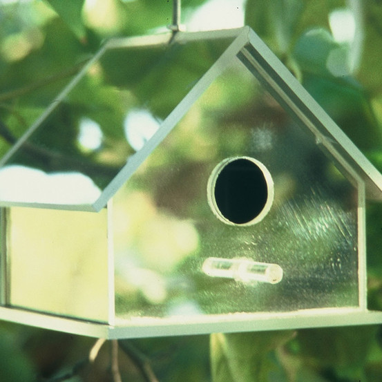 Bird House Blues, 2000