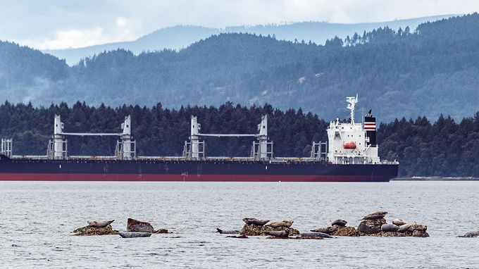 Southern Gulf Islands waters should be home to orcas, not anchored freighters