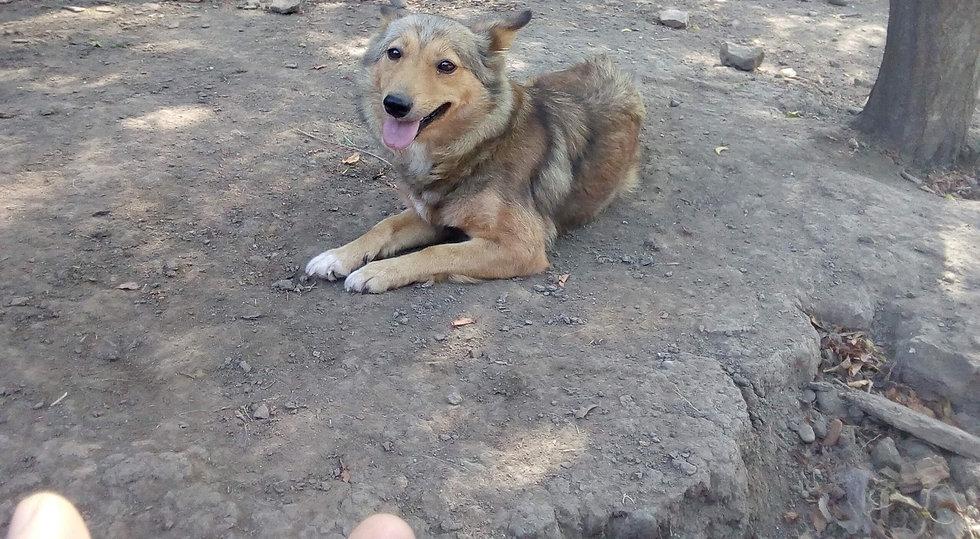Ambi, born 2015