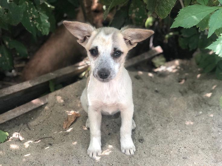 Bonbon, female, born early April