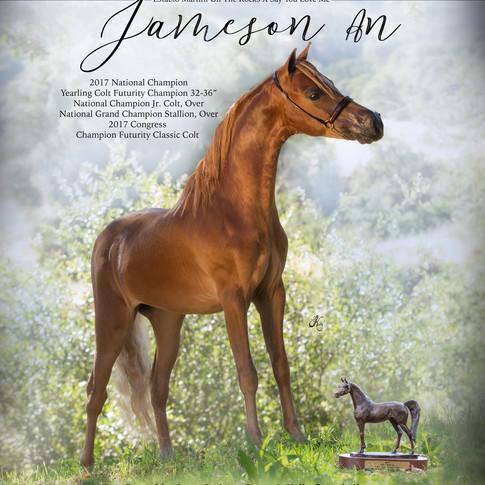 Jamison AN Back Cover.jpg