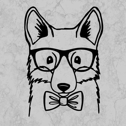 Boy fox