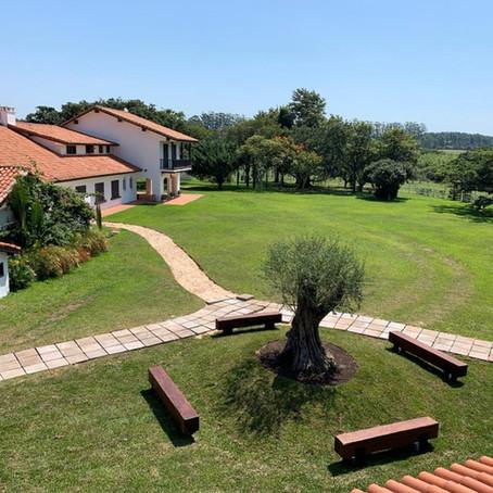Estância das Oliveiras – olivoturismo próximo a Porto Alegre