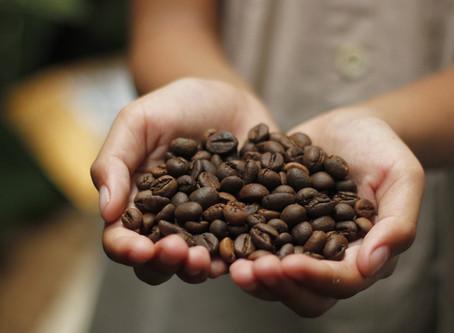 A chegada do café no Brasil