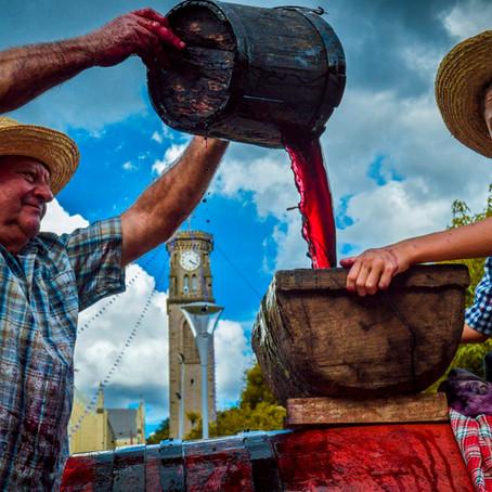 Uva, vinho e tradição: último final de semana da Festa da Vindima, em Flores da Cunha