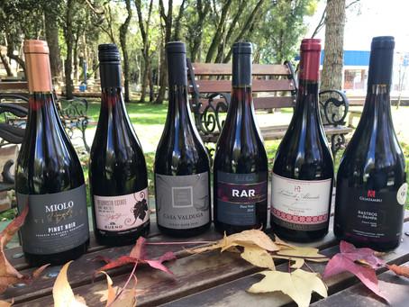 Dica da Bon Vivant: Seis Pinot Noir brasileiros que você deve degustar. Confira notas e valores