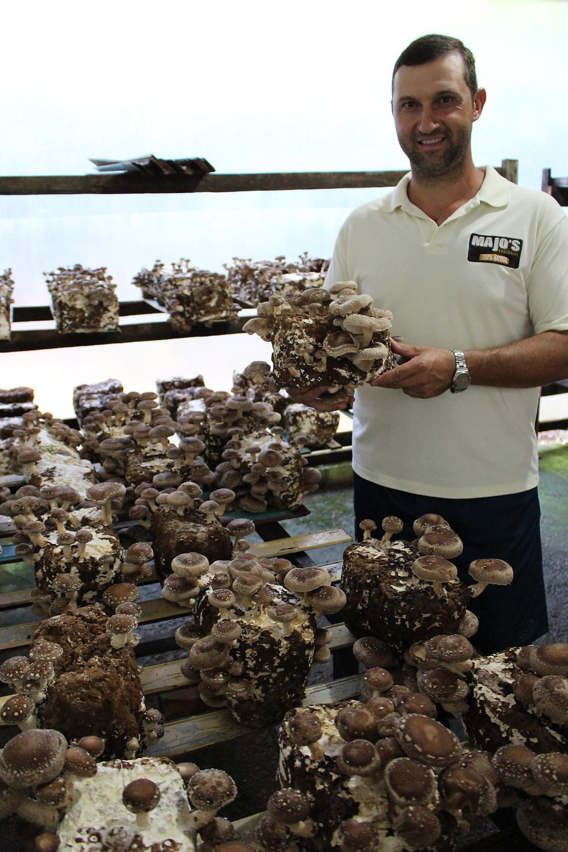 O produtor Joel Bolzan se aventurou na produção de cogumelos por hobby e hoje o cultivo rende bons frutos na economia familiar e no turismo