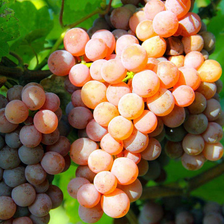 Gewürztraminer: o nome é estranho, mas o vinho é muito bom! Confira duas sugestões